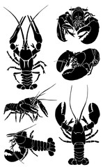 Graphical set of lobsters isolated on white background,vector sea-food sketch
