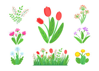Spring garden flowers vector with blooming grass border. Simple plant bouquet illustration. Springtime nature elements isolated on white background