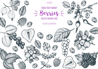 Berry hand drawn vector illustration frame. Hand drawn sketch illustration with strawberry, cranberry, briar berry, shadberry, blackberry, gooseberry Healthy food design template with berry.
