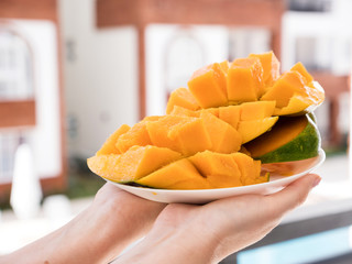 Half cutted cubes slices ripe mango in female hands