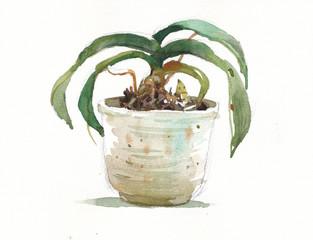 pot plant green leaves