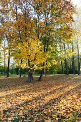 Yellow foliage, autumn