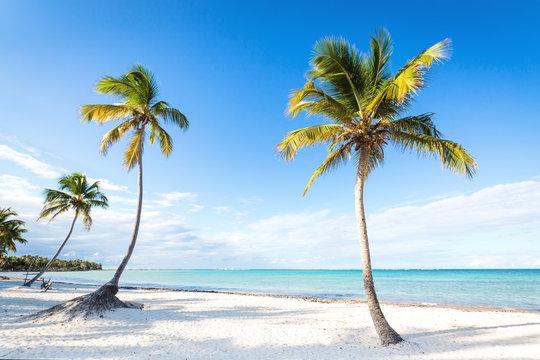 Coconut palm trees an pristine bounty beach
