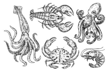 Hand drawn sketch octopus, shrimp, squid, lobster, crab. Seafood vector illustration for menu, restaurants or markets.Retro style.