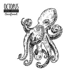 Hand drawn sketch octopus. Seafood vector illustration for menu, restaurants or markets.Retro style.