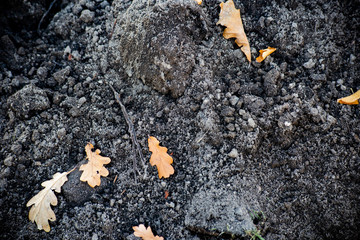 A pile of dark ground with oak leaves