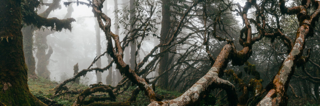 Forest in fog in Nepal, Everst area