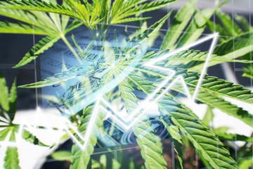 Marijuana Stocks Exploding High Quality Stock Photo