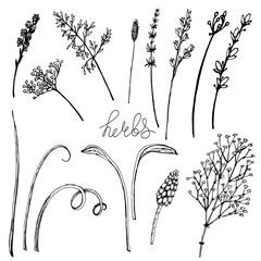 Vector wild black and white floral elements for your design. Stylized cute herbs, leaves and flowers