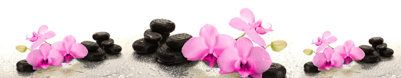 Różowe storczyki na kamieniu | Pink orchids on stone