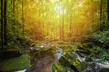 Stream nature green plant tree rainforest tropical jungle small waterfall river with rock flow from mountains