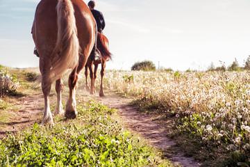 horse ride in sunny weather. Horizontal photo Wall mural