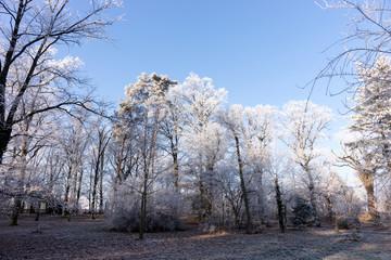 Winter landscape. Winter wonderland with forest snowy winter trees
