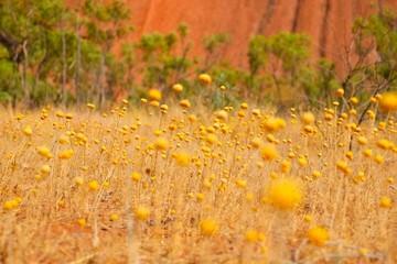 エアーズロックと砂漠の植物