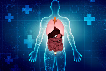 3d illustration digestive system