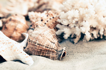 Seashells on the sand, summer beach background with copy space for text.