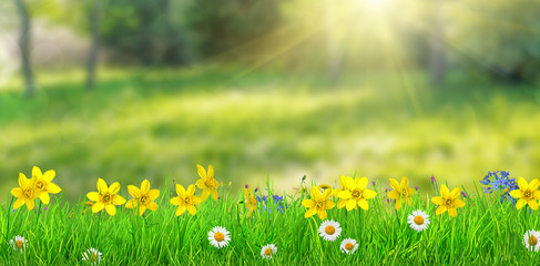 a fantasy spring forest meadow with flowers and grass