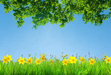 a spring narcissus and daisy flowers and green grass background