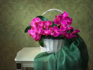 Still life with basket of pink orchids