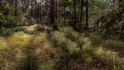 a forest in the forest - Ein Wald im Wald