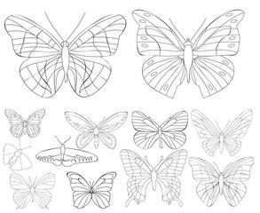 set of butterflies sketch