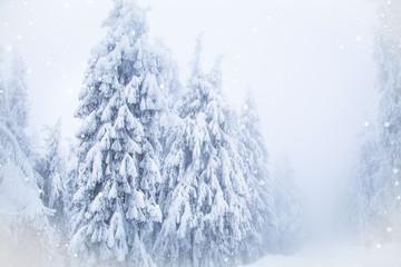 Winter wonderland snow on fir trees