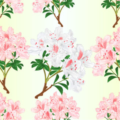 Seamless texture white and light pink rhododendrons branch mountain shrub vintage vector illustration editable hand draw