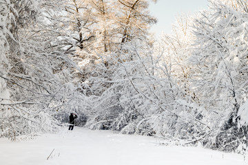 Winter in the park, winter landscape. A men making photos of snow covered trees. Moscow parks.
