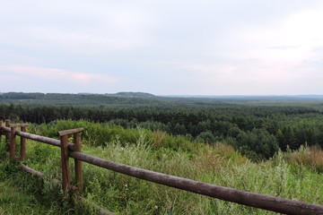 A view of a pine forest and a wooden fence