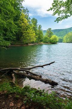 Morske Oko lake among primeval beech forest. beautiful Vihorlat landscape of Slovakia in late summer. clean environment concept. wonderful european adventure