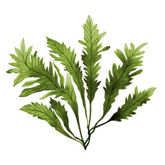 Green leaf,Green Seaweed, kelp, Algae in the ocean, watercolor hand painted element isolated on white background. Watercolor green seaweed,green leaves  illustration design. With clipping path.
