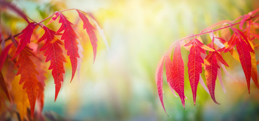Autumn leafes on wide blurred background, very shallow focus. Colorful foliage in the autumn park.