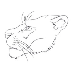 portrait of a cougar drawing lines, vector