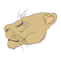 portrait of a cougar, vector