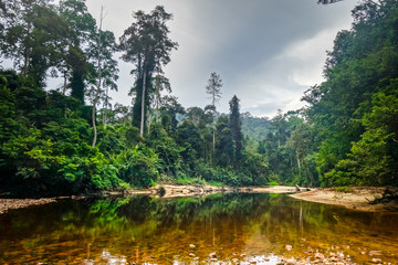 Papiers peints Lieu connus d Asie River in Jungle rainforest Taman Negara national park, Malaysia