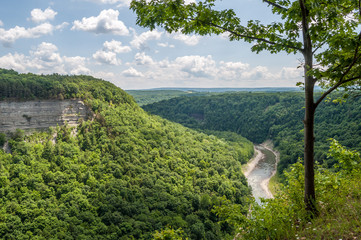 Summer Shade and Greenery Along the Genesee River in New York's Letchworth State Park