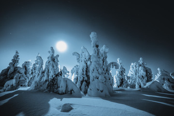 Scenic view of snow covered trees in forest at night