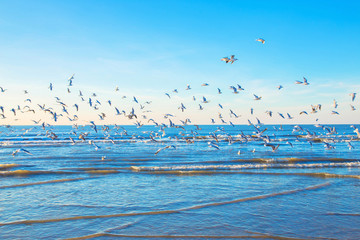 A flock of gulls over the sea.