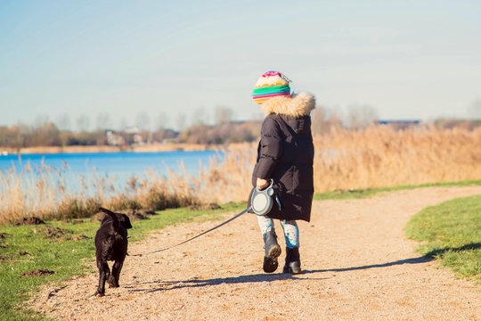 Small child is walking a Labrador Retriever puppy.
