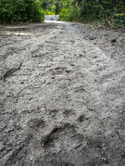 Animal tracks on trail