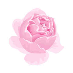 Tea fragrant pink rose flower icon. Vector illustration  in cartoon flat style isolated on white.