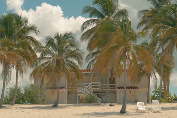 View of babassu palm trees against house at beach