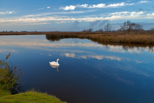 View of swan swimming in lake against cloudy sky