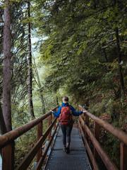 Rear view of female backpacker walking on footbridge in forest