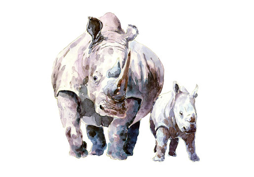 Rhino with calf in the wild environment. watercolor.