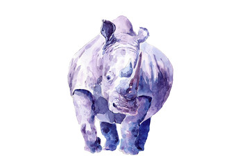 Lonely male rhino. Drawing in watercolor.
