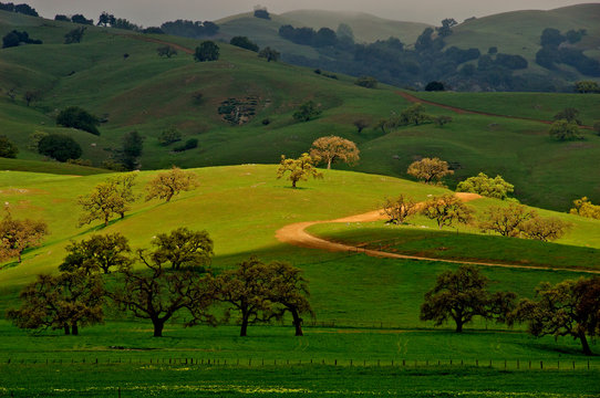 Sunlit Hill, Gilroy, California