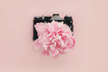 Pink peony growing from vintage photo camera on pastel pink paper. Feminine flat lay with copy space. Hello spring. Summer vacation. International Women's Day. Peony bloom on camera