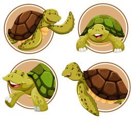 Set of turtle banner