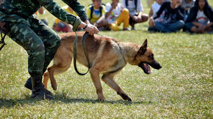 Dog Training, Show Dogs of War,  to learn the human language. Dogs can follow orders well.